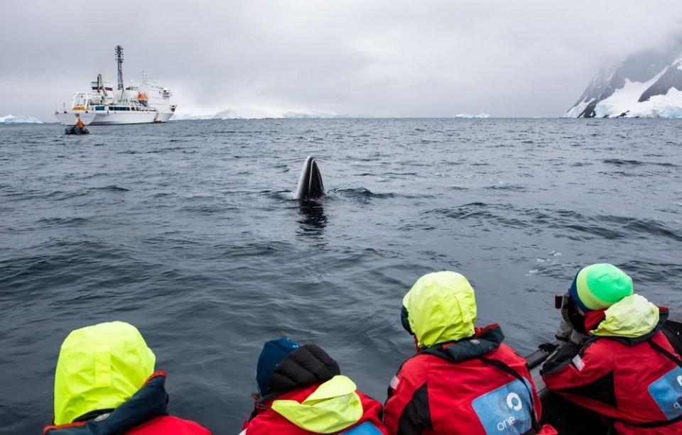 Whales Feb 18